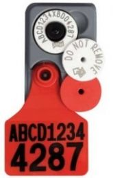 Allflex White Breeder Tags with LARGE Matching Management Tags