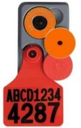 Allflex Orange Post Breeder Tags with LARGE Matching Management Tags