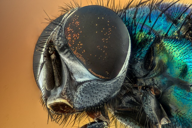 Are you prepared for this summer's flies?