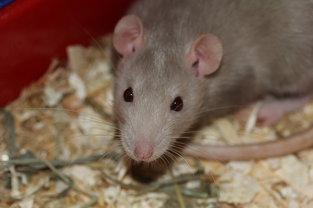 Do you have a rodent problem?